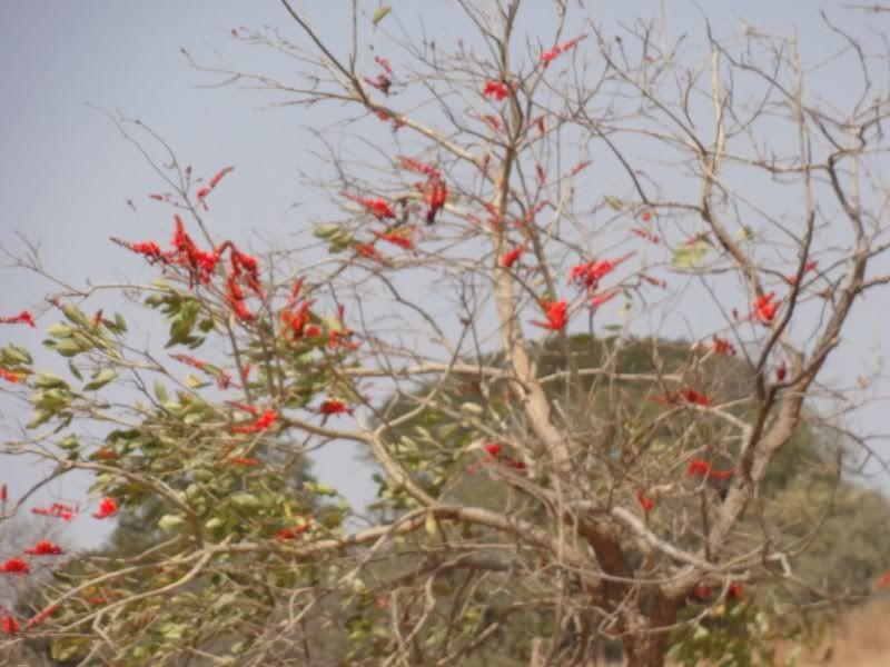 Memórias de África Central 2012 - 19Janeiro-02Fevereiro DSC01520