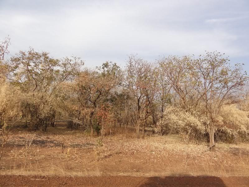 Memórias de África Central 2012 - 19Janeiro-02Fevereiro DSC01528