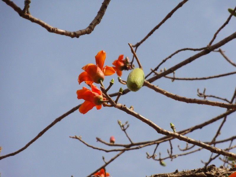 Memórias de África Central 2012 - 19Janeiro-02Fevereiro DSC01569