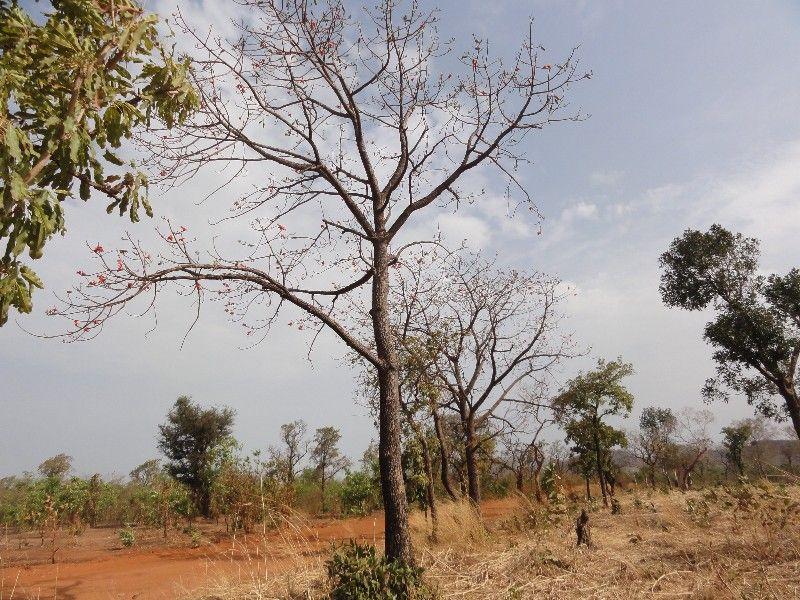 Memórias de África Central 2012 - 19Janeiro-02Fevereiro DSC01570