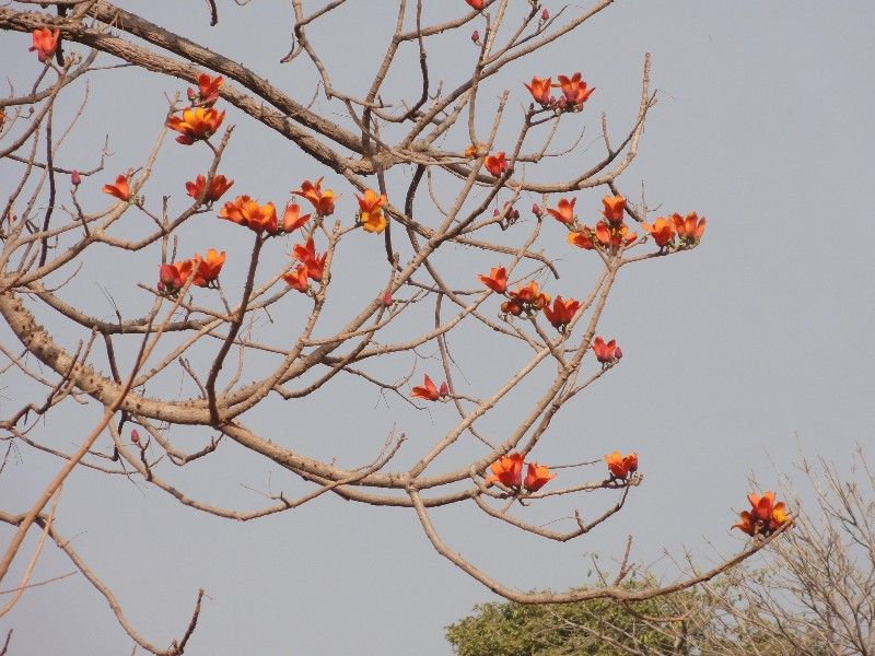 Memórias de África Central 2012 - 19Janeiro-02Fevereiro DSC01576