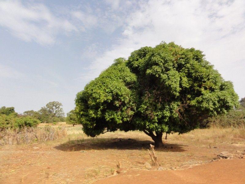 Memórias de África Central 2012 - 19Janeiro-02Fevereiro DSC01577