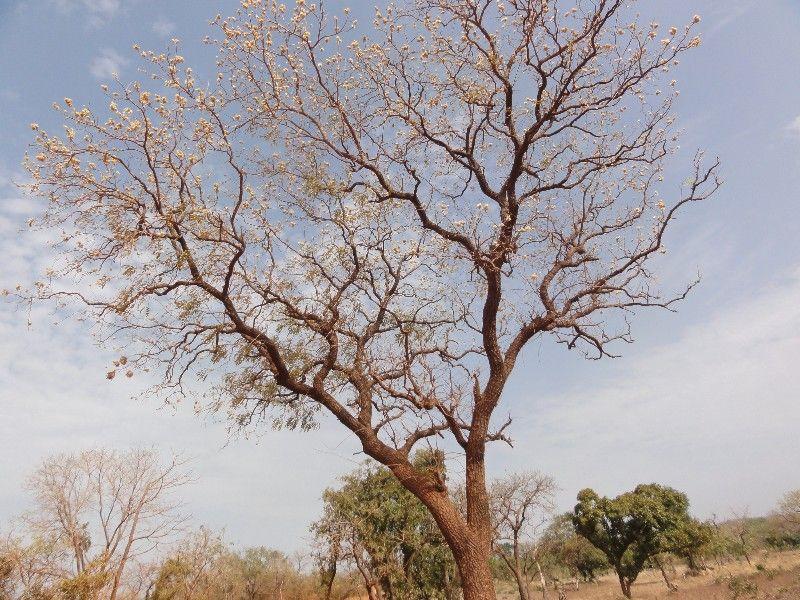 Memórias de África Central 2012 - 19Janeiro-02Fevereiro DSC01584
