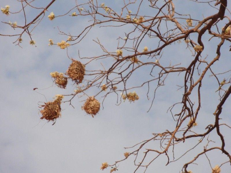 Memórias de África Central 2012 - 19Janeiro-02Fevereiro DSC01585