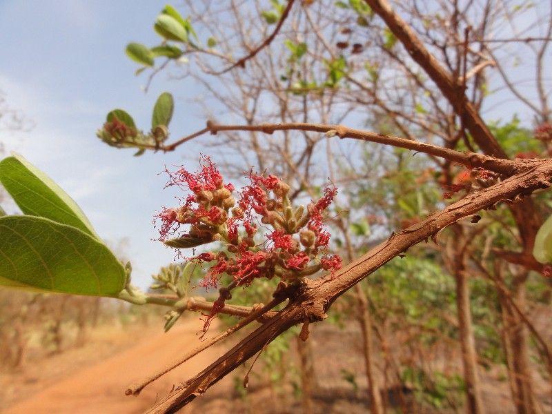 Memórias de África Central 2012 - 19Janeiro-02Fevereiro DSC01602