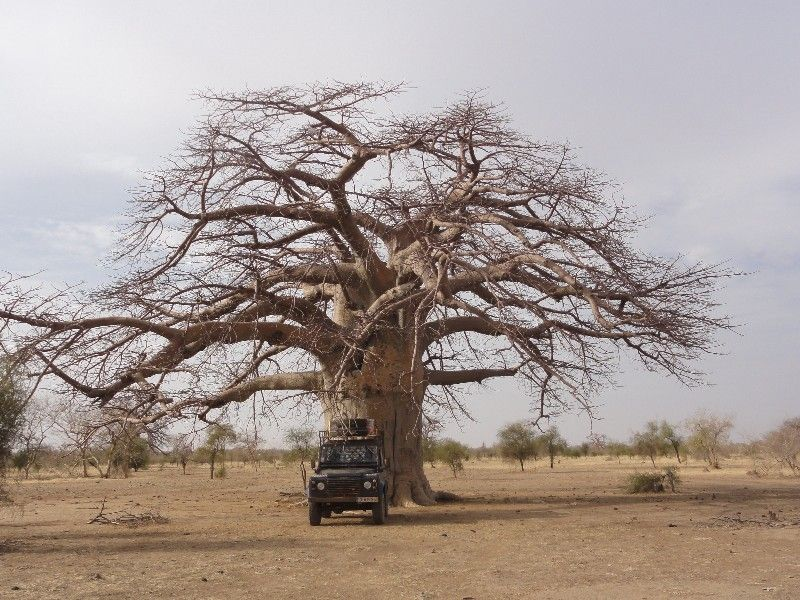 Memórias de África Central 2012 - 19Janeiro-02Fevereiro DSC01636