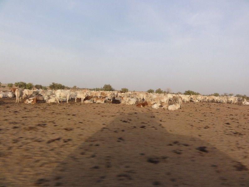 Memórias de África Central 2012 - 19Janeiro-02Fevereiro DSC01653