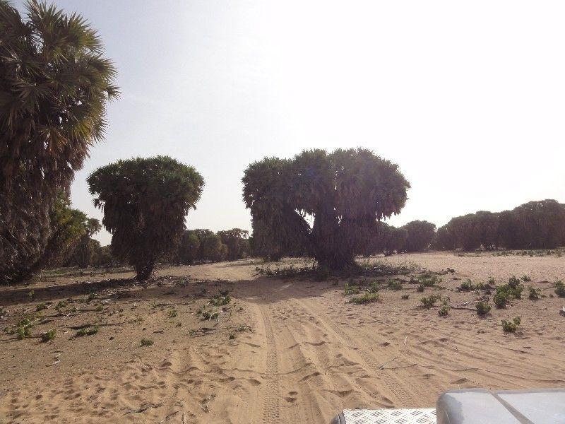 Memórias de África Central 2012 - 19Janeiro-02Fevereiro DSC01659