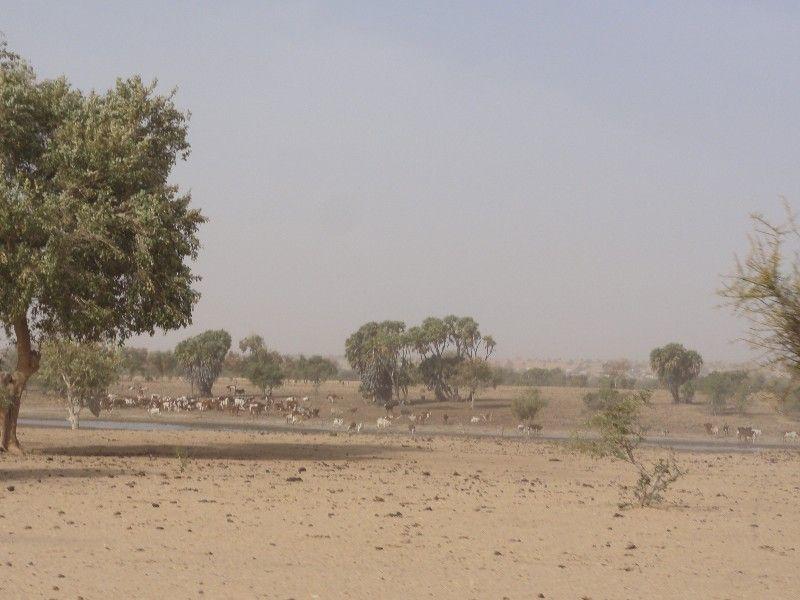 Memórias de África Central 2012 - 19Janeiro-02Fevereiro DSC01662