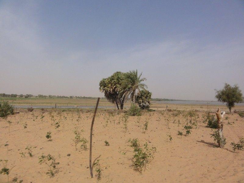 Memórias de África Central 2012 - 19Janeiro-02Fevereiro DSC01663