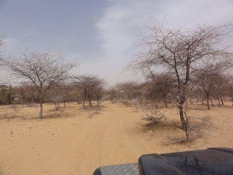 Memórias de África Central 2012 - 19Janeiro-02Fevereiro DSC01672