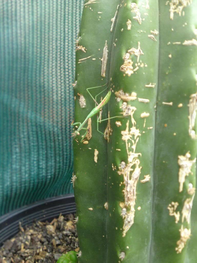 greenhouse critters DSC00340