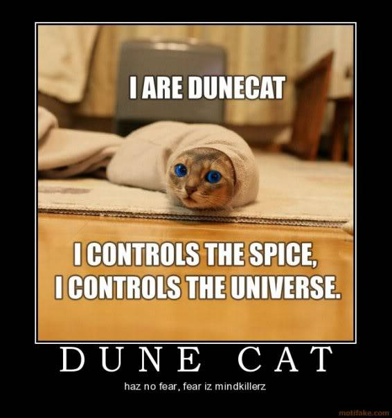 Kitty thread. - Page 3 Dune_cat