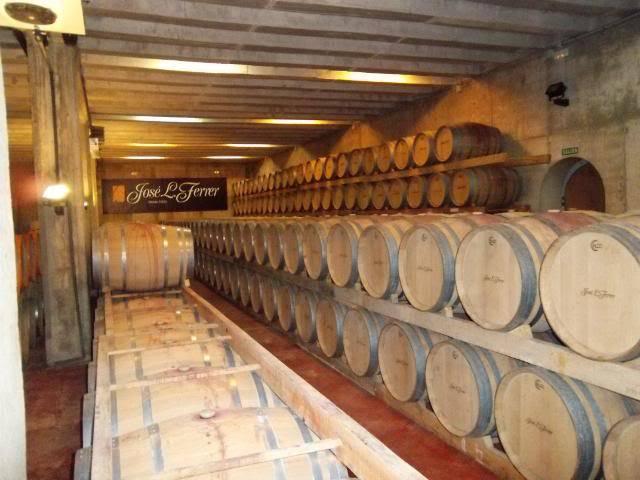 Binnisalem José L Ferrer vineyard tour 100_0788