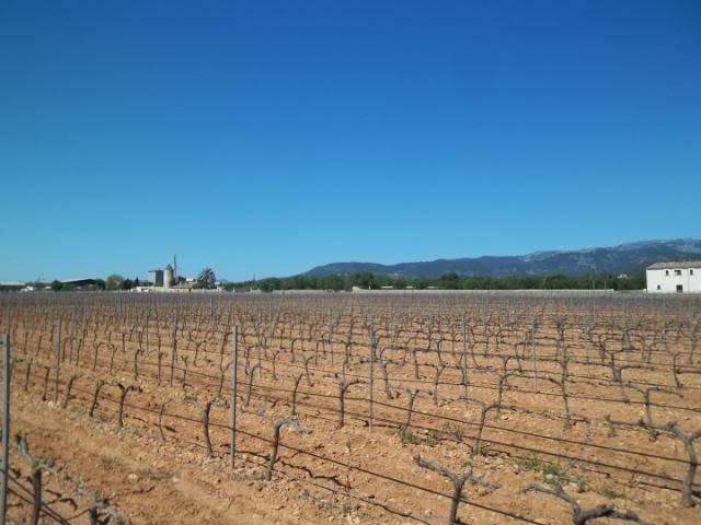 Binnisalem José L Ferrer vineyard tour 100_0795