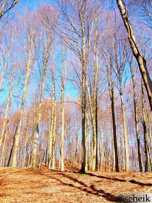 Powitanie Wiosny 2012 - Łagowsko-Sulęciński Park Krajobrazowy. Wyp053
