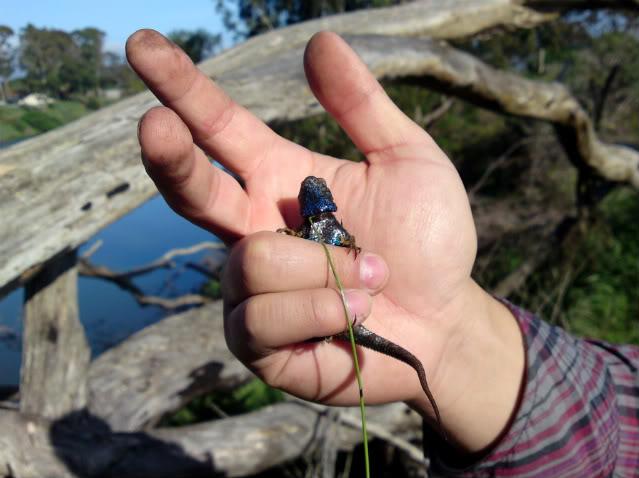 Lizard Fishin'! DSC00263
