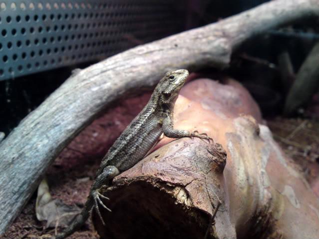 Lizard Fishin'! DSC00279-1