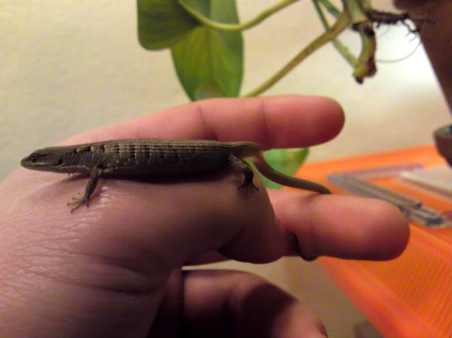 Lizard Fishin'! DSC00281-1