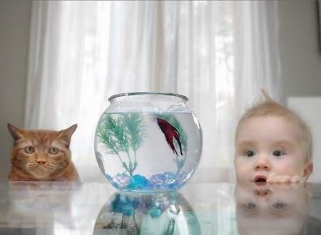 Fotografije životinja - Page 5 Ribica-macka-dijete-smijesna-slika