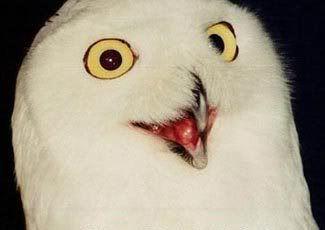 Buzón de Yuhanna Assad Owl-orly