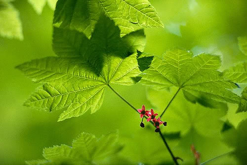 BUG POKEMON Green-leaf-large