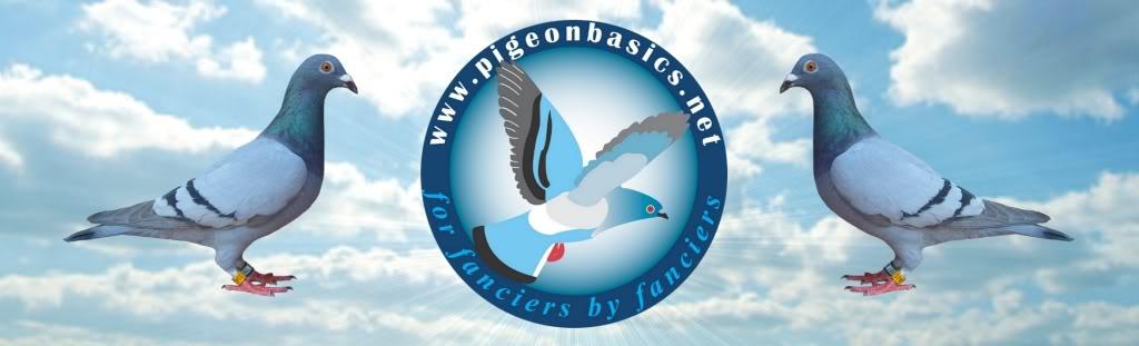 Pigeonbasics.net Pigeon basics