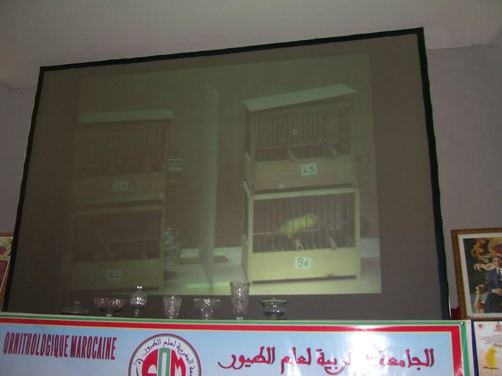 les photos de concour de malinois Marrakech 100_2810