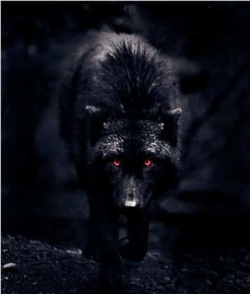 El Lobo de ojos rojos / The Demon Wolf Darrenw2