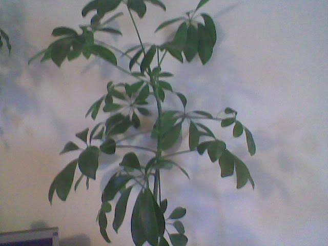 schimburi de plante , seminte...etc .. - Pagina 3 Imag107