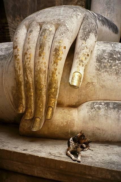 Bouddha - Page 3 Tumblr_n1yzwoOfg91rebxsto1_500