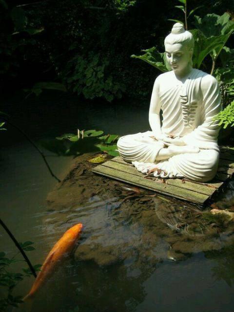 Bouddha - Page 3 Tumblr_nk1f1fLkef1src12qo1_540