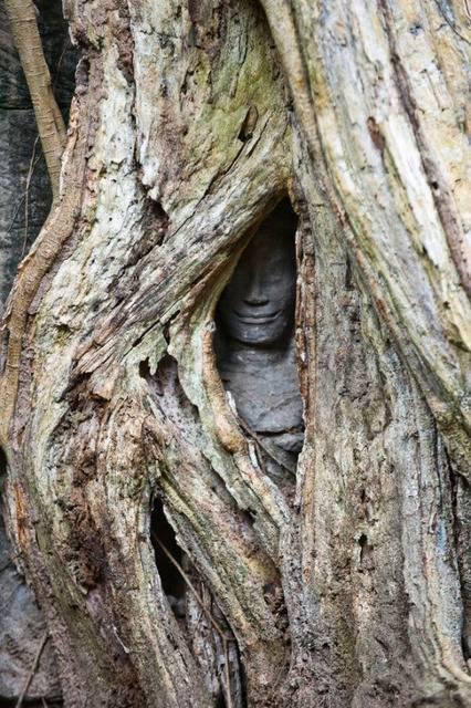 Bouddha - Page 3 Tumblr_nlhtkbgTIp1s1vn29o1_540