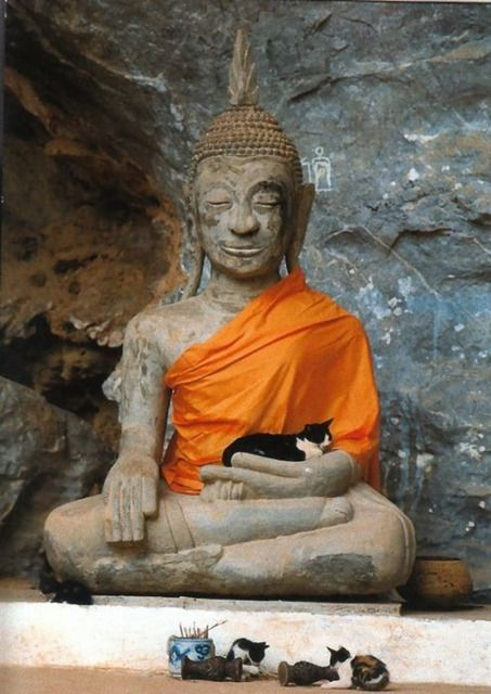 Bouddha - Page 2 Tumblr_nqtddaione1risx5so1_540