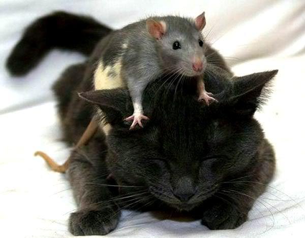 Insolites en général  - Page 7 Sweet_couples_animals_26