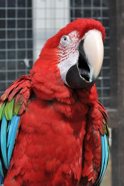 Photo's of the parrot day today! 008-2