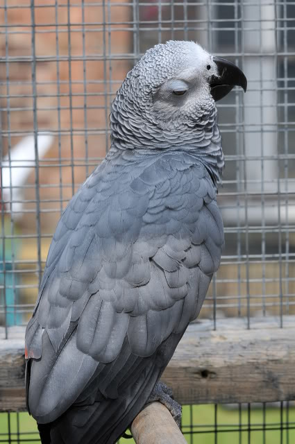 Photo's of the parrot day today! 059