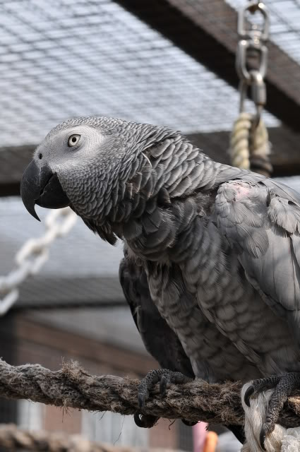 Photo's of the parrot day today! 081