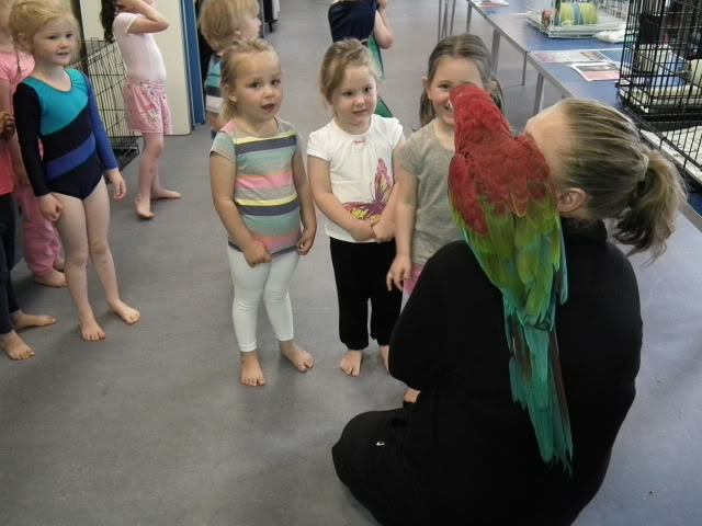 Photo's of the parrot day today! DSCF0781