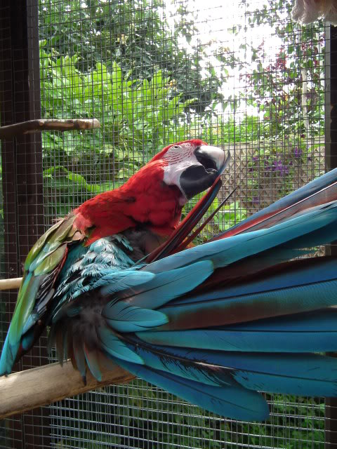 Photo's of the parrot day today! DSCF0849