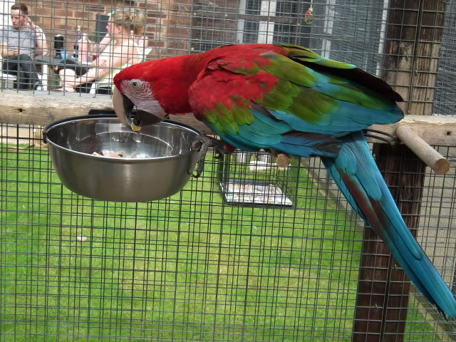 Photo's of the parrot day today! DSCF0858