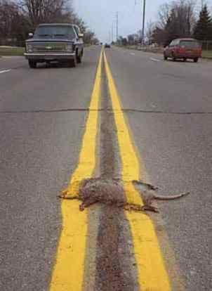 canadian jokes/ random other stuff RoadKill