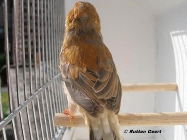 Nova mutação em Estudo Oranjerug041