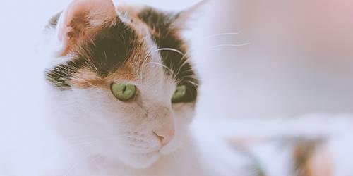 Description + Cat = Game! - Page 2 Poppyspotschar