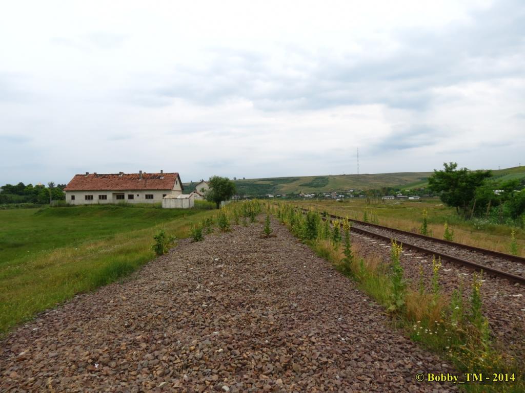 609 : Dingeni - Saveni - Drăguşeni - Pagina 4 IMG_4099_zpsb4db698d