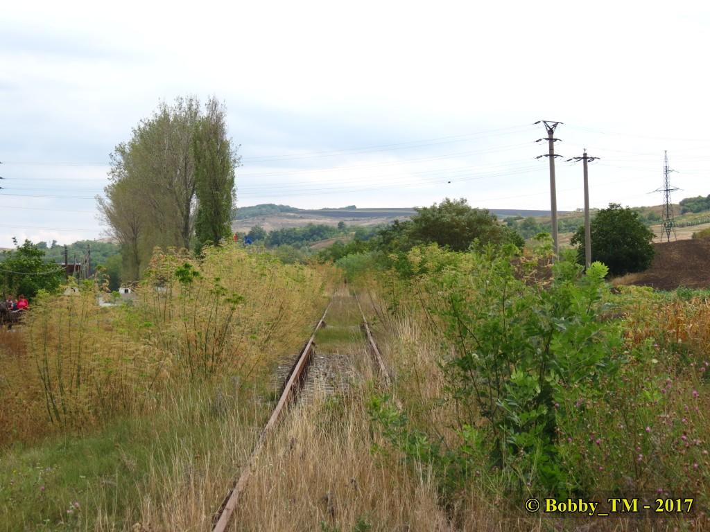 609 : Dingeni - Saveni - Drăguşeni - Pagina 5 IMG_2273_zpsmwnqome5