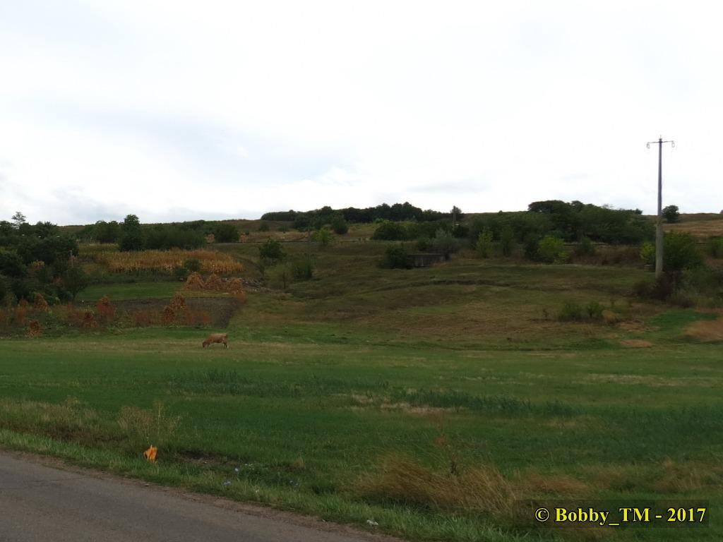 609 : Dingeni - Saveni - Drăguşeni - Pagina 5 IMG_2288C_zpsqlowicyx