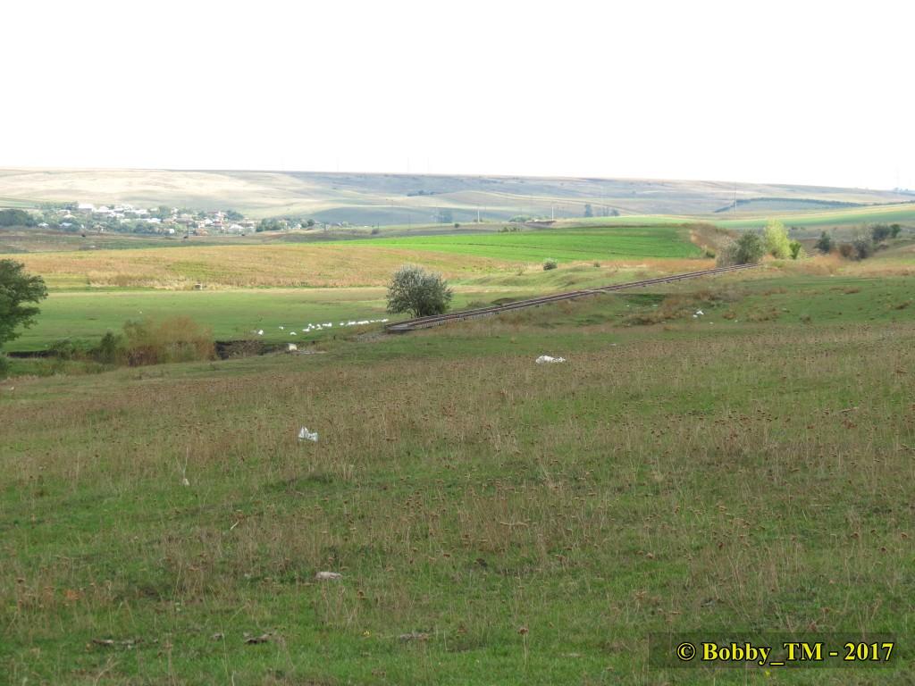 609 : Dingeni - Saveni - Drăguşeni - Pagina 5 IMG_2330_zpshxy0be5b