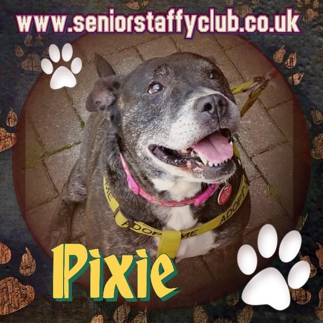 Pixie - Aged 8 - 10 in foster in Fife Pixie%2025_zpsihktdirl