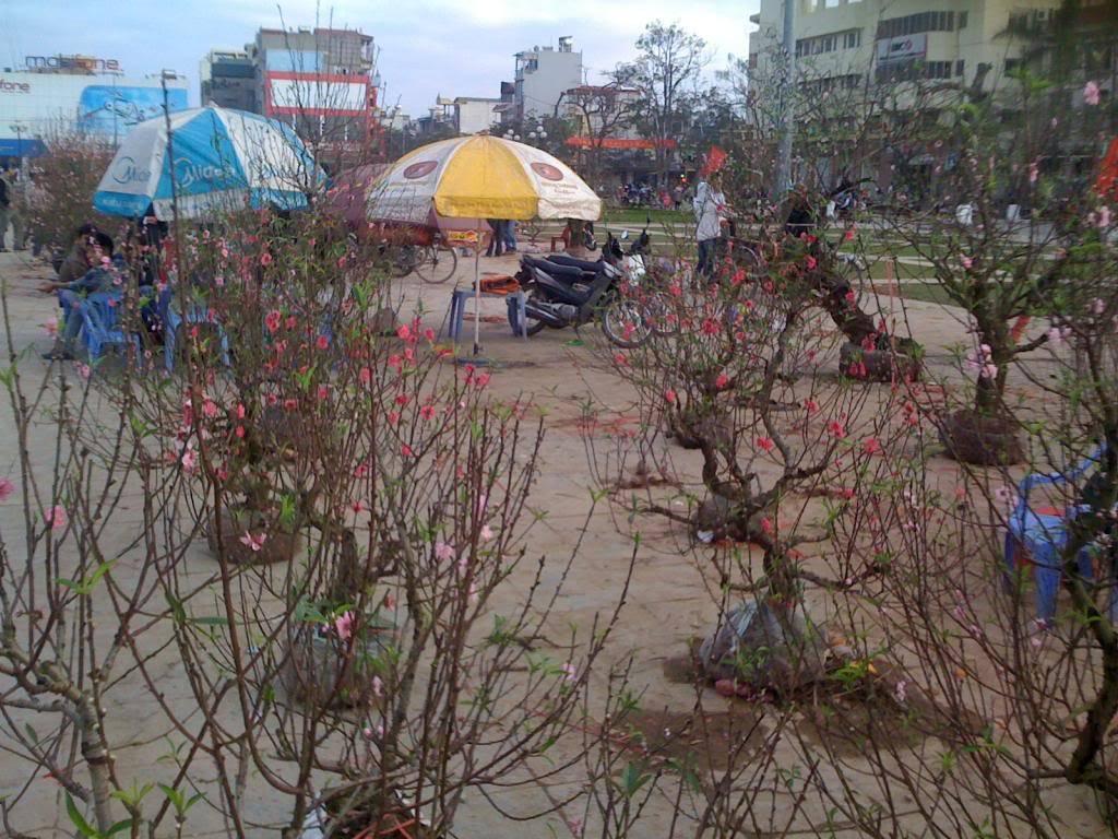 TOPIC Săn ảnh Xuân Qúi Tỵ 2013  Picture067_zpsaedaa55b